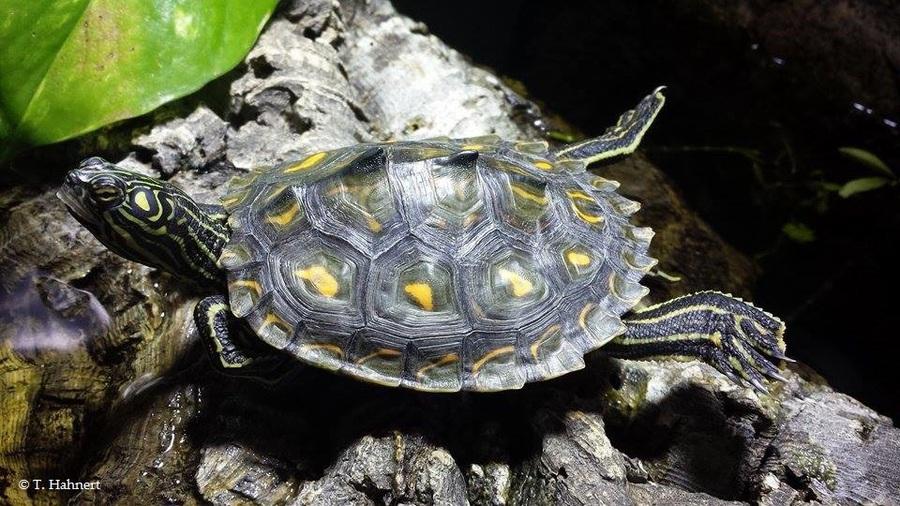 gute led lampen für schildkröten
